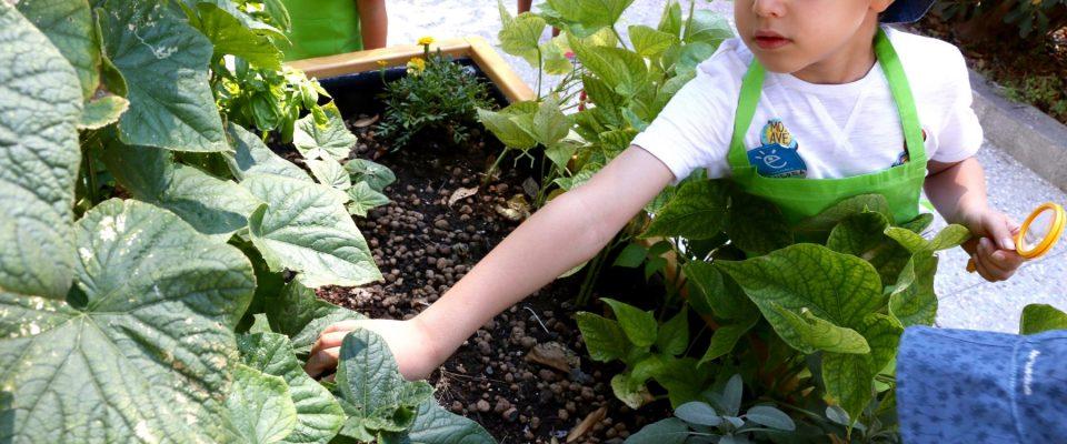 gardensslider2